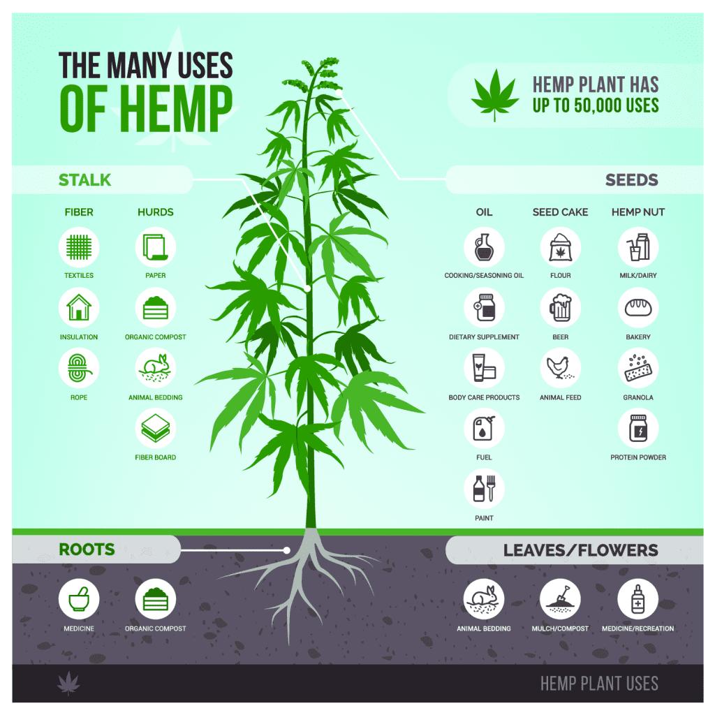 new uses of hemp infographic