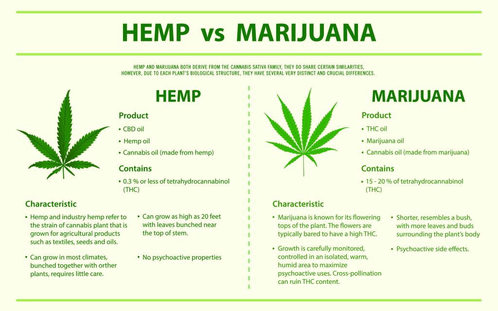 hemp vs marijuana infographic