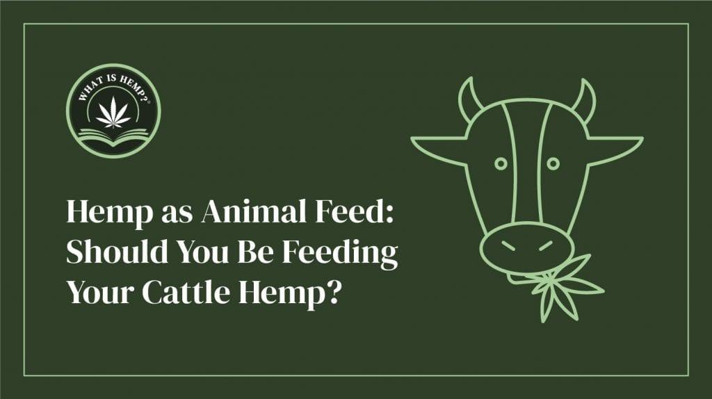 hemp as animal feed
